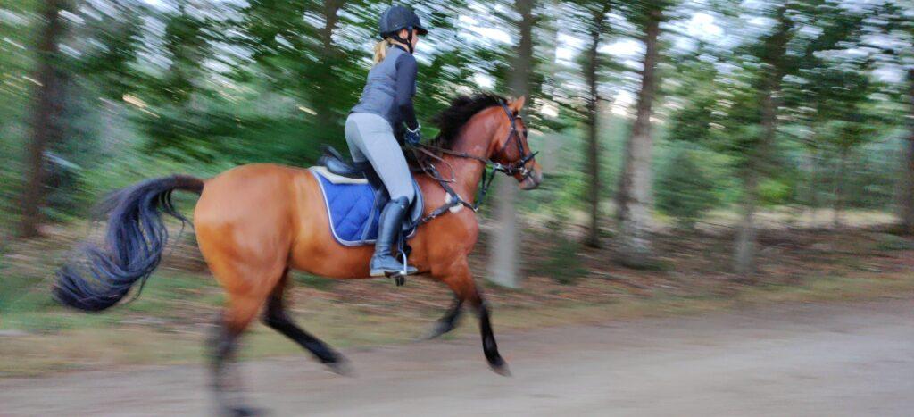 Paardrijden in de Achterhoek