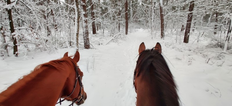 Paarden in de sneeuw bij Bed en breakfast het Bospaard